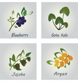 collection herbs natural supplements argan vector image