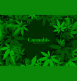 green marijuana or cannabis leaves background vector image vector image