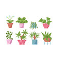 home plants set vector image vector image