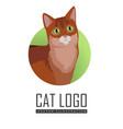 somali cat flat design vector image
