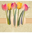 Vintage postcard with a beautiful tulips EPS 10 vector image vector image