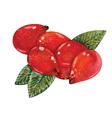 Watercolor Rosehips vector image