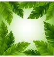 Banana leaves frame with copy space vector image