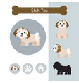 shih tzu dog breed infographic vector image vector image