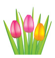 vector bunch of tulips vector image