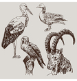 digital drawing of stork falcon goose and goat vector image
