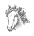 Horse head sketch of arabian mare vector image
