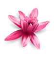 lotus flower isolated on white background vector image vector image