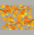 maple branch with colorful leaves isolated on vector image vector image