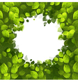 summer banner of green foliage vector image vector image