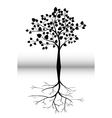 tree silhouette for you design vector image vector image