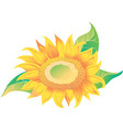 yellow sunflower with green leaves vector image
