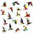 colorful silhouettes birds flying vector image vector image