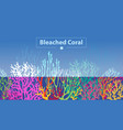 coral bleaching occurs rising sea temperatures and vector image vector image