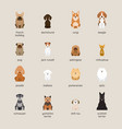 dog breeds set small and medium size vector image vector image