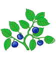 bilberry branch vector image