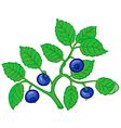 bilberry branch vector image vector image
