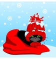 Black cat in a red hat and scarf vector image vector image