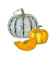 hand drawn fall pumpkins vector image