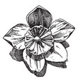 hellebore flower is used as an ornament design in vector image vector image