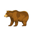 color of bear grizzly isolated vector image vector image