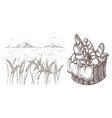 fresh bread basket and ears of wheat vector image