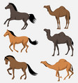 horse and camel collection vector image vector image