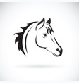 Horse head on white background wild animal vector image