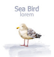 seabird watercolor cute bird isolated on vector image