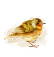 small sparrow watercolor cute bird vector image