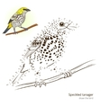 Speckled tanager bird learn to draw vector image vector image