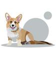 corgi dog animal cartoon flat vector image
