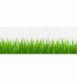 fresh green grass border vector image vector image