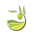 Fresh green olive with grades of olive oil vector image vector image