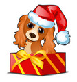 christmas gift box with a cute dog in cap of vector image vector image