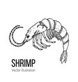 shrimp sea animal hand-drawn line sketch vector image