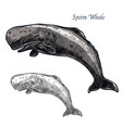 sperm whale isolated sketch icon vector image vector image
