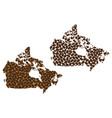 canada - map of coffee bean vector image vector image