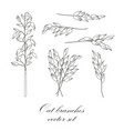 oat branches set - vector image