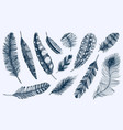 set of rustic realistic feathers of different vector image vector image