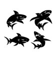 shark aggressive logo design set template vector image vector image