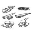 sliced parts sketch aloe vera plant vector image vector image