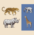 african animals rhinoceros elephant giraffe vector image