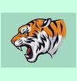 angry roaring tiger panthera tigris vector image