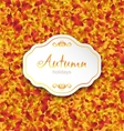 autumn card on orange leaves texture september vector image