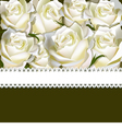 Floral background of white rose with ribbon vector image vector image