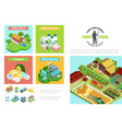agriculture and farming infographic template vector image vector image