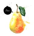 Hand drawn watercolor painting pear on white vector image vector image