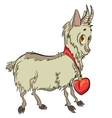 little goat with heart vector image