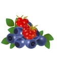 Blueberries and raspberries vector image